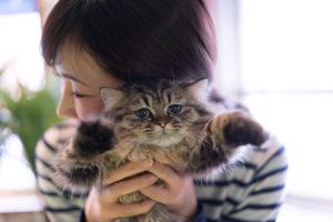 猫を抱く女性の画像