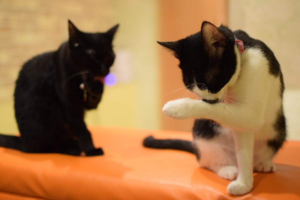 ひだまり号 保護猫たち