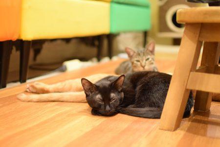 ひだまり号|保護猫たち