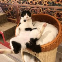 ひだまり号|スタッフ猫