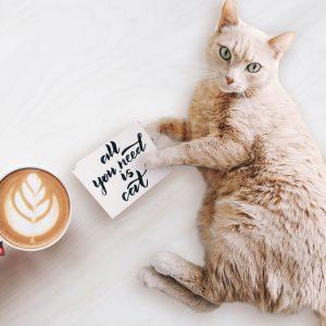 猫とコーヒーの画像